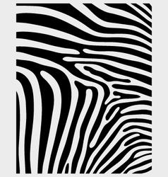 skin of zebra 2 vector image vector image