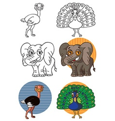 Animal elephant peacock and ostrich vector