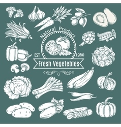 Set hand draw decorative isolated vegetables vector