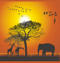 sunset over the safari vector image