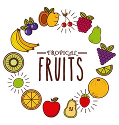 Tropical fruit design vector