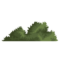 Bush plant isolated vector