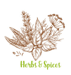 Herbs and spices sketch with basil and rosemary vector