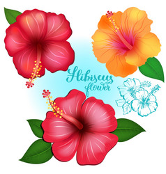 three colored exotic flowers hibiscus vector image