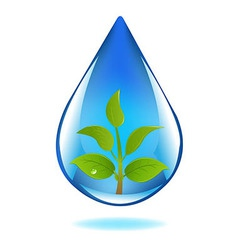 Drop of water with sprout vector