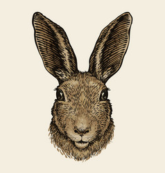 easter bunny portrait of hare sketch vintage vector image