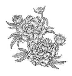 Hand drawn spring peony flowers and leaves vector