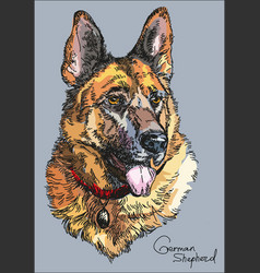 colorful german shepherd hand drawing vector image