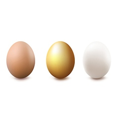 Eggs vector