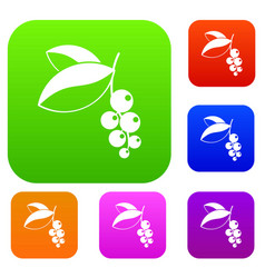 currant berries set color collection vector image vector image