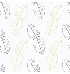 Hand drawn kaffir lime branch wirh flowers vector