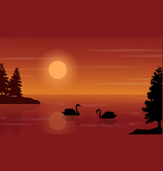 At sunset swan on lake scenery vector