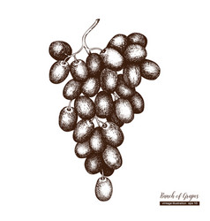 white grapes vintage sketch vector image