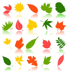 Leaf shapes vector