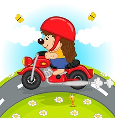 Hedgehog on motorcycle rides on road vector