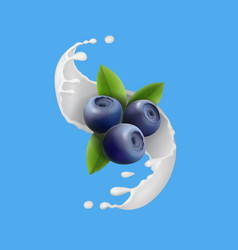 Blueberry and milky splash berry icon vector