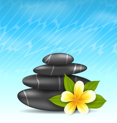 Natural background with frangipani flower plumeria vector
