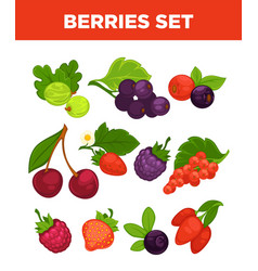Berries isolated icons set vector