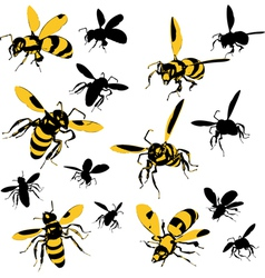 Wasps vector