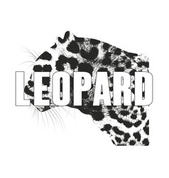 Leopard isolated on a white background vector