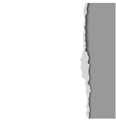 torn paper with ripped edge vector image vector image