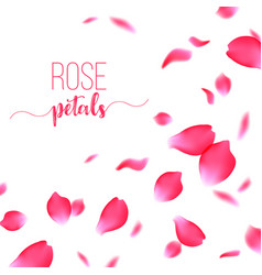 Rose red petals falling on a white background vector
