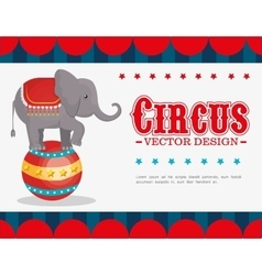 Circus entertainment amazing show vector