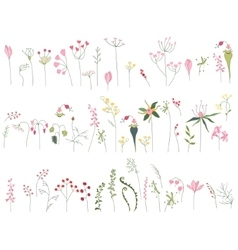Colection with stylized forest flowers and herbs vector image vector image