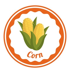 corn design vector image