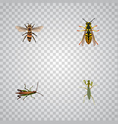 Realistic bee grasshopper locust and other vector