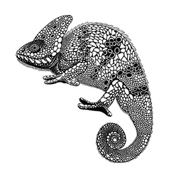 Zentangle stylized chameleon hand drawn reptile in vector