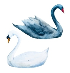 Watercolor hand drawn swans vector