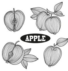 Hand drawn apple fruits vector