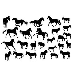 Horse donkey and zebra silhouettes vector