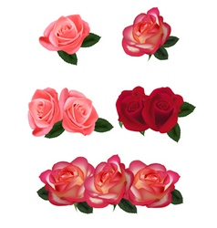 set of a beautiful roses vector image vector image