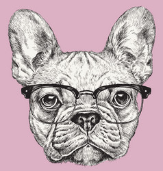 hipster geek french bulldog vector image