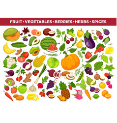 Fruits vegetables berries and spices vector