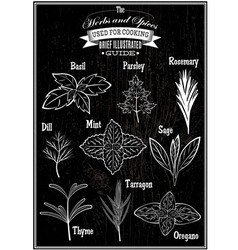 Set of images plant herbs for cooking vector