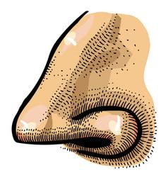 Cartoon image of human nose vector