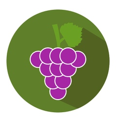 Icon grape vector