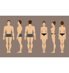 Anatomy of man and woman vector