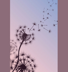 dandelion with blowing spores abstract vector image
