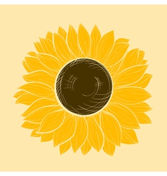 Beautiful sunflower isolated vector