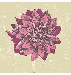 dahlia flower vector image vector image