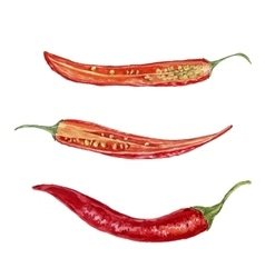 Watercolor red chili peppers vector