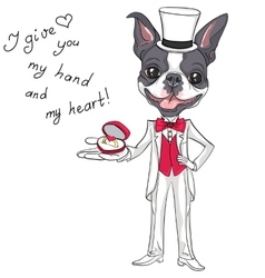 Fashion elegant groom dog boston terrier vector