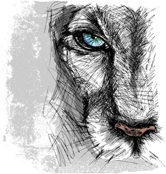 Hand drawn Sketch of a lion looking intently at th vector image