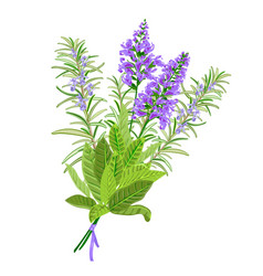 Sage and rosemary flowers vector