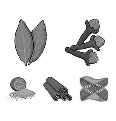 Clove bay leaf nutmeg cinnamonherbs and spices vector