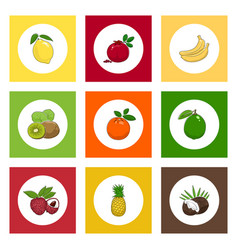 Icons citrus tropical fruits on colored background vector